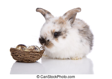 Easter bunny - Cute little easter bunny on white with...