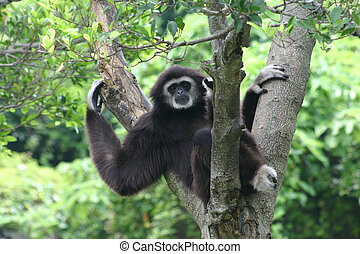 Sloth on tree waving
