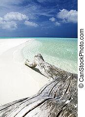 tropical beach: tree trunk left on the sand.