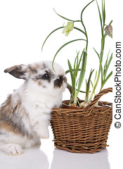 Cute bunny - Cute little bunny with spring flowers