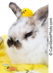 Adorable bunny with easter chicken on her head