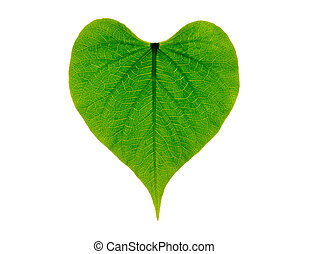 heart shaped green leaf, symbolizing love for the environment and a sustainable future