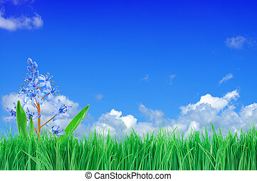 Flowers, Green Grass and Blue Sky - Blue flowers and green...