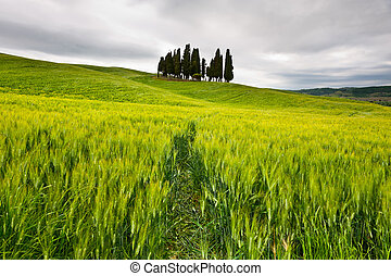 Green Meadows - Green Sloping Meadows of Tuscany