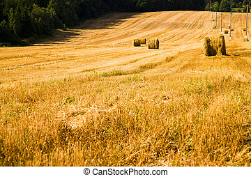 agriculture - agricultural field on which lie a straw stack