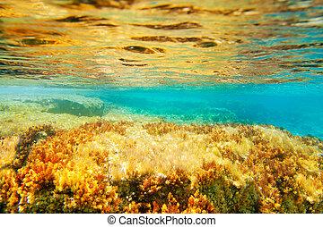 ibiza, Formentera, submarino, anémona, Vista marina