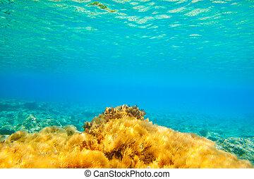 ibiza, submarino,  formentera, anémona, Vista marina