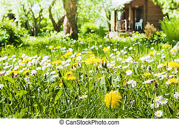 lawn with flowers in the garden