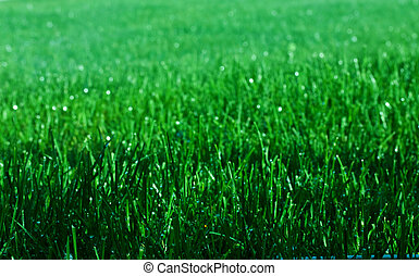Sparkling Grass - Green grass with sparkling water droplets