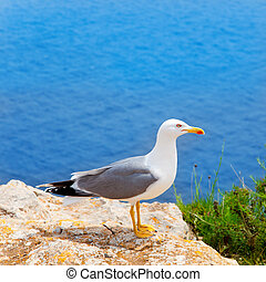 sea bird on mediterranean sea in Balearic islands - sea bird...