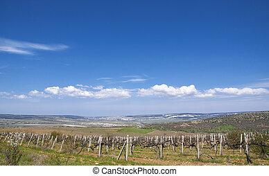 Grapevines in spring, Crimea - A vineyard in April, Crimea,...