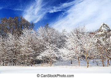 Winter forest - Winter landscape of a sunny forest after a...