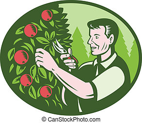 Horticulturist Farmer Pruning Fruit - Illustration of a...