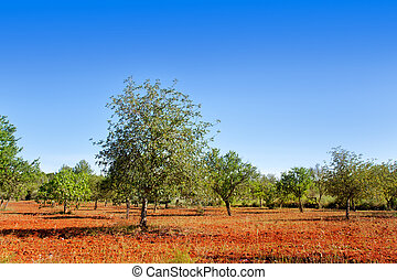 Agriculture in Ibiza island mixed mediterranean trees -...