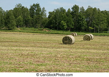 Rolls of hay in field - A tractor picks up the hay on the...
