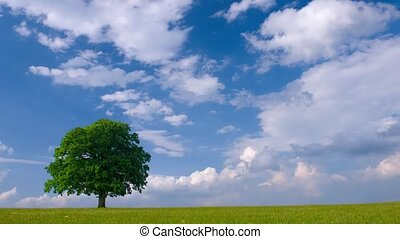 single tree and clouds on sky - time lapse video of a big...