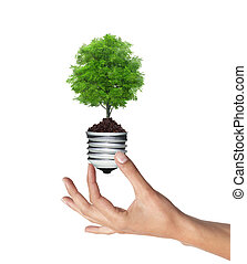 tree in a lightbulb in woman hand over white, green energy...
