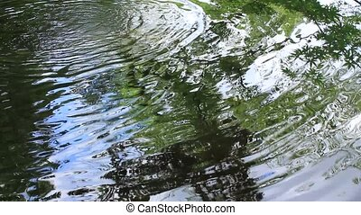 surface of the water - I took the tree which I shook for...