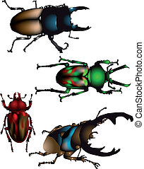 collection of beetles - set of four giant beetle isolated on...
