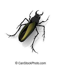 ciervo, escarabajo