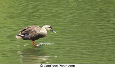 duck - I took the duck which was on the surface of the water...
