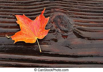 Colorful Maple Leaf on Log