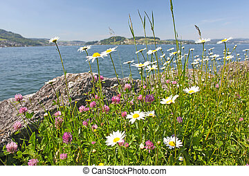 Camomile flowers near a lake in the mountains