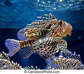 beautiful motley fish - Photo of the beautiful motley fish...