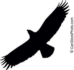 Eagle silhouette - Silhouette of eagle flying with spread...