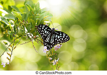 Beautiful black and white spotted Papilio butterfly resting...
