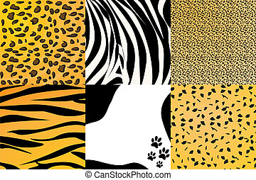 Animal skin - Vector illustration of different animal skin