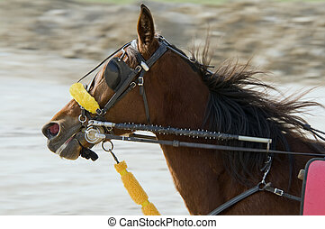 Riding horse in harness racing