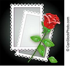White frame and rose