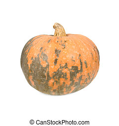 Pumpkin. Isolated on white background.
