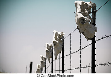 Cow skull - Fence with cow skulls around western ranch