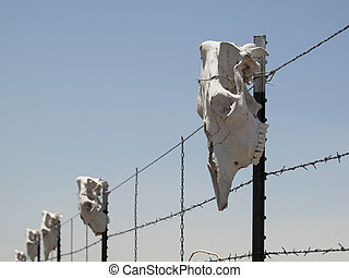 Cow skull - Fence with cow skulls around western ranch.