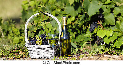 glass and bottle of white wine with grapes in basket, France