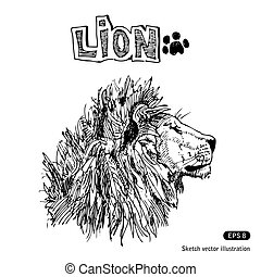 Lion. Hand drawn vector isolated on white