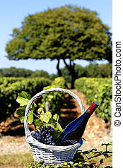 bottle of wine and grappes in basket, France