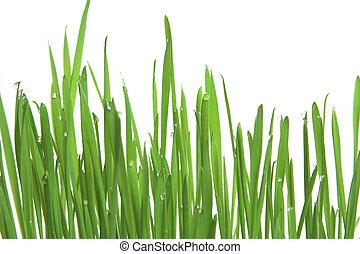 Green grass, horizontal format - Fresh green grass with...