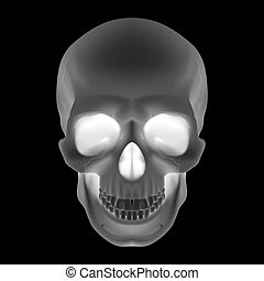 Human Skull Black and White illustration for design