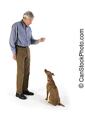 training the dog - training the little brown dog with...