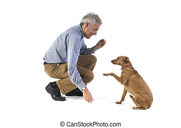 Obedience  - Training obedience by the little brown dog