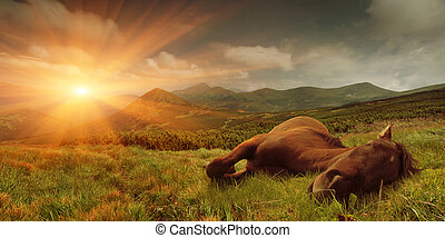 Summer landscape with a sleeping horse in the mountains. Sunrise