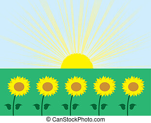 Sunflowers with sunburst background