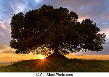 Sunbeams at sunset in Tuscany - Sunbeams shining below a...