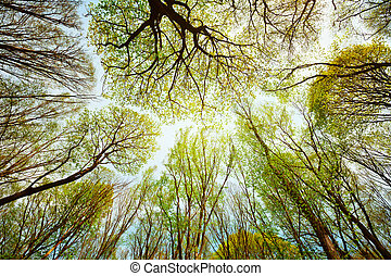 Trees in the forest - leaves against the sky - Trees in the...
