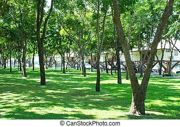 多数, 木, 公園, 家