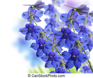 Delphinium Flowers - Blue Delphinium Flowers ,Close Up