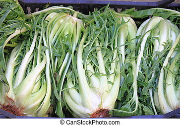 Chicory - Bunches of chicory for sale in a greengrocery